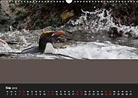 Pinguine - sympathische Frackträger im eisigen Süden (Wandkalender 2019 DIN A3 quer) - Produktdetailbild 5