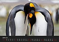 Pinguine - sympathische Frackträger im eisigen Süden (Wandkalender 2019 DIN A3 quer) - Produktdetailbild 6