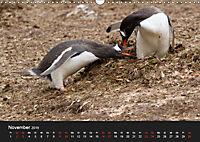 Pinguine - sympathische Frackträger im eisigen Süden (Wandkalender 2019 DIN A3 quer) - Produktdetailbild 11