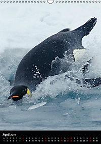 Pinguine - Wackeln im Thermo-Frack (Wandkalender 2019 DIN A3 hoch) - Produktdetailbild 4