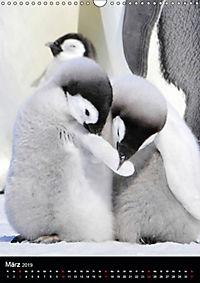 Pinguine - Wackeln im Thermo-Frack (Wandkalender 2019 DIN A3 hoch) - Produktdetailbild 3
