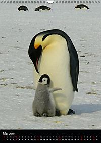 Pinguine - Wackeln im Thermo-Frack (Wandkalender 2019 DIN A3 hoch) - Produktdetailbild 5