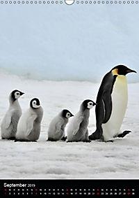 Pinguine - Wackeln im Thermo-Frack (Wandkalender 2019 DIN A3 hoch) - Produktdetailbild 9