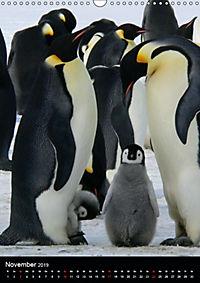 Pinguine - Wackeln im Thermo-Frack (Wandkalender 2019 DIN A3 hoch) - Produktdetailbild 11
