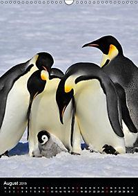 Pinguine - Wackeln im Thermo-Frack (Wandkalender 2019 DIN A3 hoch) - Produktdetailbild 8