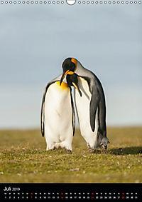 Pinguine - Wackeln im Thermo-Frack (Wandkalender 2019 DIN A3 hoch) - Produktdetailbild 7