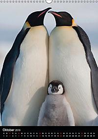 Pinguine - Wackeln im Thermo-Frack (Wandkalender 2019 DIN A3 hoch) - Produktdetailbild 10