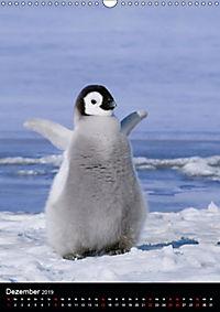 Pinguine - Wackeln im Thermo-Frack (Wandkalender 2019 DIN A3 hoch) - Produktdetailbild 12