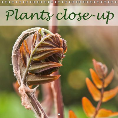 Plants close-up (Wall Calendar 2019 300 × 300 mm Square), Thomas Becker