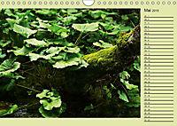 Plitvicer Seen - Europas erster Nationalpark (Wandkalender 2019 DIN A4 quer) - Produktdetailbild 5
