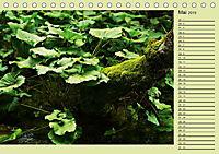 Plitvicer Seen - Europas erster Nationalpark (Tischkalender 2019 DIN A5 quer) - Produktdetailbild 5
