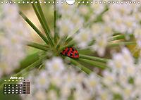Poetic Nature (Wall Calendar 2019 DIN A4 Landscape) - Produktdetailbild 6
