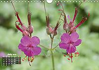 Poetic Nature (Wall Calendar 2019 DIN A4 Landscape) - Produktdetailbild 7