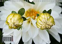Poetic Nature (Wall Calendar 2019 DIN A4 Landscape) - Produktdetailbild 9