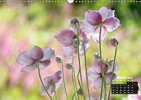 Poetry of Autumn Anemones (Wall Calendar 2019 DIN A3 Landscape) - Produktdetailbild 3