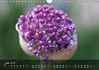 Poetry of Blossom Buds (Wall Calendar 2019 DIN A4 Landscape) - Produktdetailbild 6