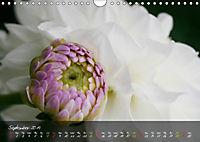 Poetry of Blossom Buds (Wall Calendar 2019 DIN A4 Landscape) - Produktdetailbild 9