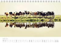 Polderlandschaften in Holland (Tischkalender 2019 DIN A5 quer) - Produktdetailbild 6