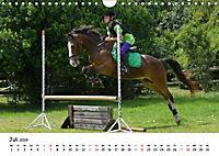 Pony Springreiten (Wandkalender 2019 DIN A4 quer) - Produktdetailbild 7
