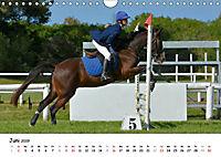 Pony Springreiten (Wandkalender 2019 DIN A4 quer) - Produktdetailbild 6