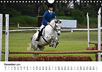 Pony Springreiten (Wandkalender 2019 DIN A4 quer) - Produktdetailbild 11