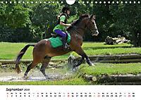 Pony Springreiten (Wandkalender 2019 DIN A4 quer) - Produktdetailbild 9