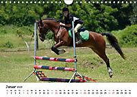 Pony Springreiten (Wandkalender 2019 DIN A4 quer) - Produktdetailbild 1