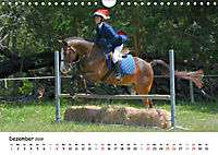 Pony Springreiten (Wandkalender 2019 DIN A4 quer) - Produktdetailbild 12