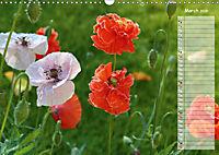 Poppies in my garden (Wall Calendar 2019 DIN A3 Landscape) - Produktdetailbild 3