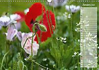 Poppies in my garden (Wall Calendar 2019 DIN A3 Landscape) - Produktdetailbild 1