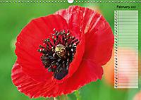 Poppies in my garden (Wall Calendar 2019 DIN A3 Landscape) - Produktdetailbild 2