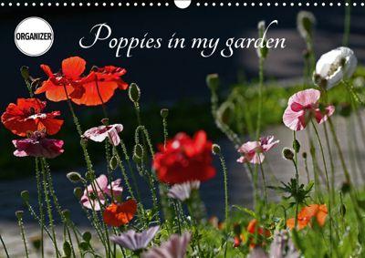 Poppies in my garden (Wall Calendar 2019 DIN A3 Landscape), Gisela Kruse