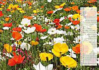 Poppies in my garden (Wall Calendar 2019 DIN A3 Landscape) - Produktdetailbild 6