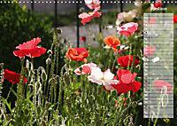 Poppies in my garden (Wall Calendar 2019 DIN A3 Landscape) - Produktdetailbild 4