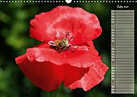 Poppies in my garden (Wall Calendar 2019 DIN A3 Landscape) - Produktdetailbild 7
