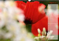 Poppies in my garden (Wall Calendar 2019 DIN A3 Landscape) - Produktdetailbild 8