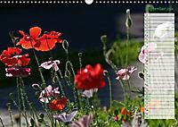 Poppies in my garden (Wall Calendar 2019 DIN A3 Landscape) - Produktdetailbild 9