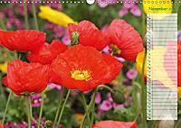 Poppies in my garden (Wall Calendar 2019 DIN A3 Landscape) - Produktdetailbild 11
