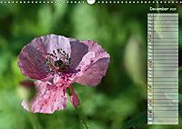 Poppies in my garden (Wall Calendar 2019 DIN A3 Landscape) - Produktdetailbild 12