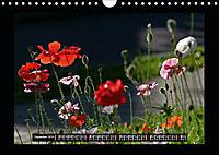 Poppies in my garden (Wall Calendar 2019 DIN A4 Landscape) - Produktdetailbild 9