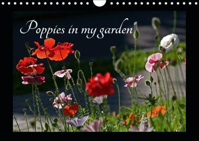 Poppies in my garden (Wall Calendar 2019 DIN A4 Landscape), Gisela Kruse