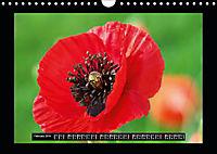 Poppies in my garden (Wall Calendar 2019 DIN A4 Landscape) - Produktdetailbild 2