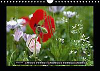Poppies in my garden (Wall Calendar 2019 DIN A4 Landscape) - Produktdetailbild 1