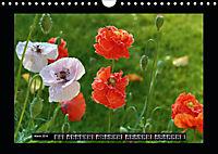 Poppies in my garden (Wall Calendar 2019 DIN A4 Landscape) - Produktdetailbild 3