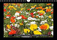 Poppies in my garden (Wall Calendar 2019 DIN A4 Landscape) - Produktdetailbild 6