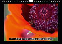 Poppies in my garden (Wall Calendar 2019 DIN A4 Landscape) - Produktdetailbild 5