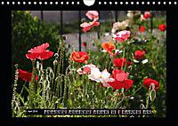 Poppies in my garden (Wall Calendar 2019 DIN A4 Landscape) - Produktdetailbild 4