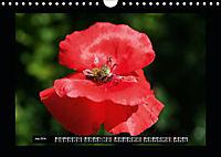 Poppies in my garden (Wall Calendar 2019 DIN A4 Landscape) - Produktdetailbild 7