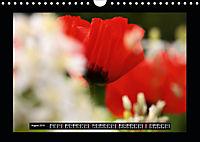 Poppies in my garden (Wall Calendar 2019 DIN A4 Landscape) - Produktdetailbild 8