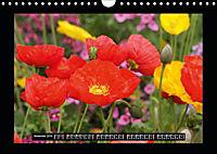 Poppies in my garden (Wall Calendar 2019 DIN A4 Landscape) - Produktdetailbild 11